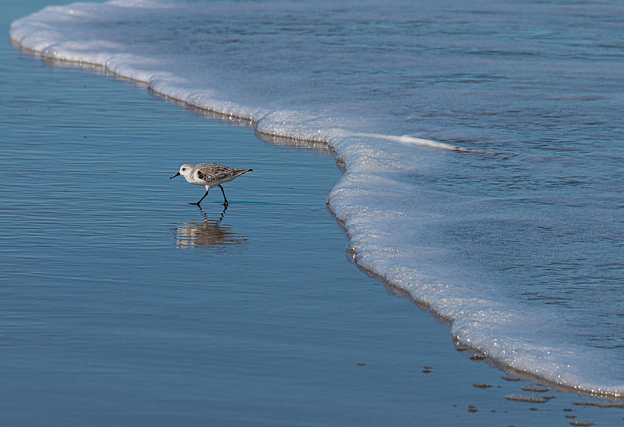 Shore Bird by Philip Rispin