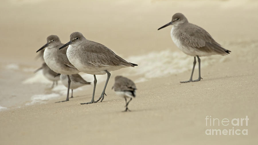 Shorebird Squad by Banyan Ranch Studios