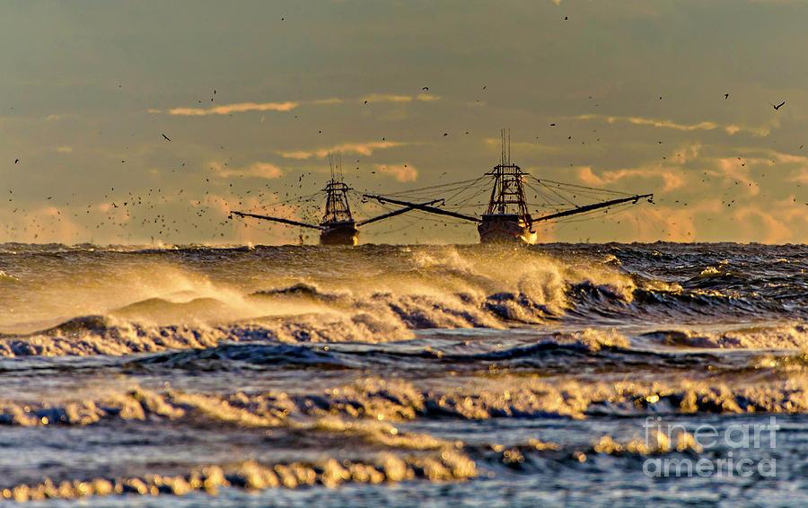 Shrimp Waves by DJA Images