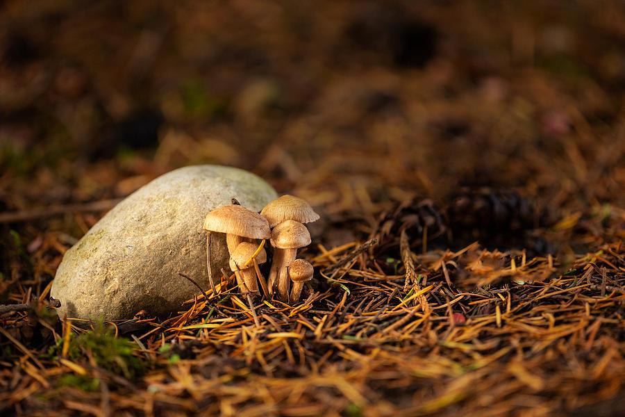 Shroom Family by Bob Cournoyer