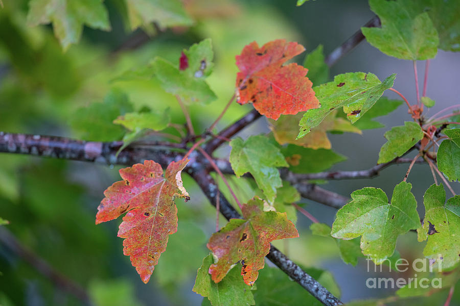 Signs Of Autumn Photograph