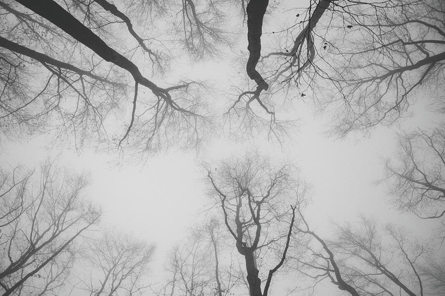 Silence In Forest Photograph