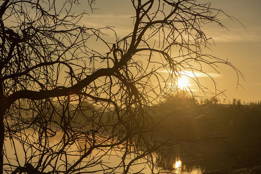 Guadiana Photograph - Silhouette Of The Branches Of A Tree By The River At Sunrise by Vicen Photography