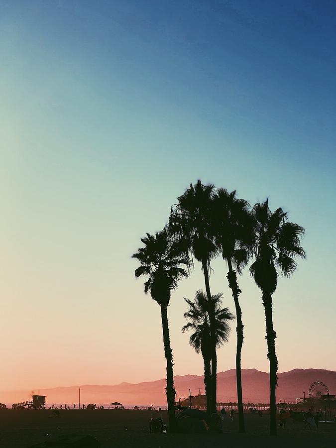 Silhouette Palm Trees Against Clear Sky Photograph by Jeronnin Caoagdan / EyeEm