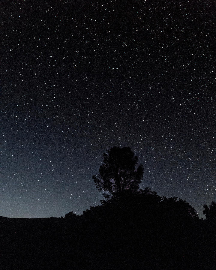 Silhouette Trees Against Star Field Photograph by Jesse Coleman / EyeEm