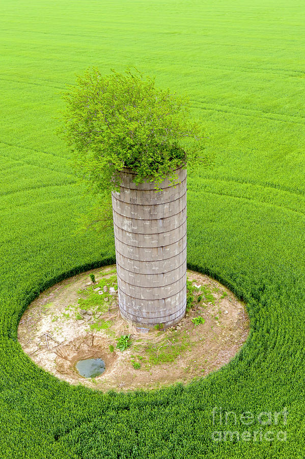 Silo With Tree Photograph