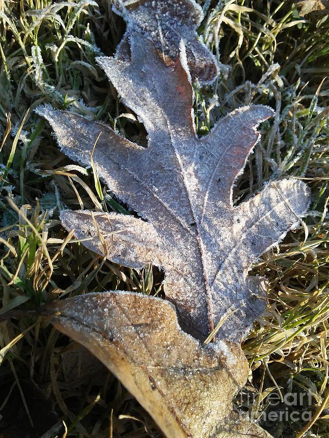 Silverwood Leaf Frost by Tammy Nara