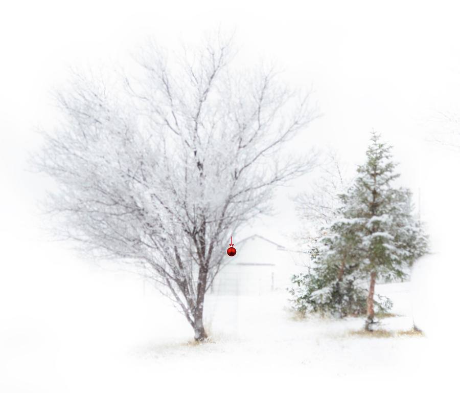 Trees Photograph - Simply Christmas by Laura Terriere