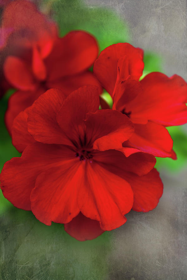 Simply Red Photograph
