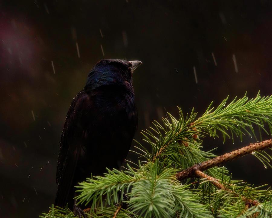 Sitting In The Rain Photograph