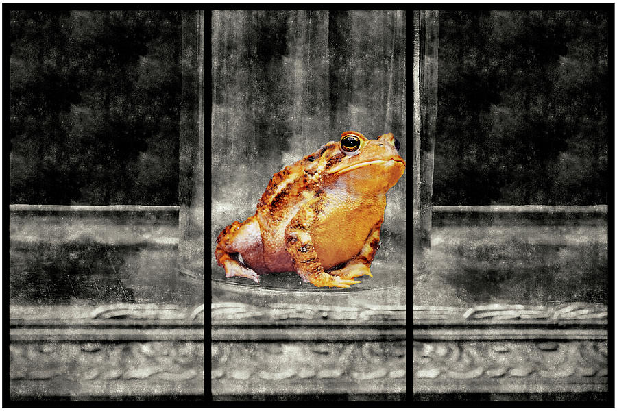 Sitting Toad Mixed Media