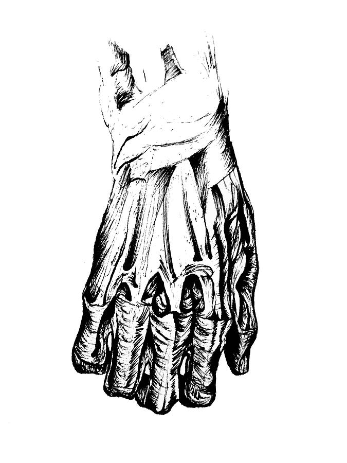 Skeleton Hand Drawing By Andrei Donisa