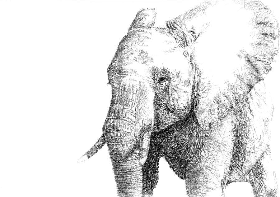 Sketch Of An Elephant Drawing By Nadia Parapanova