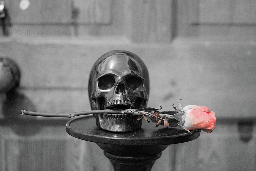 Skull And Rose Photograph
