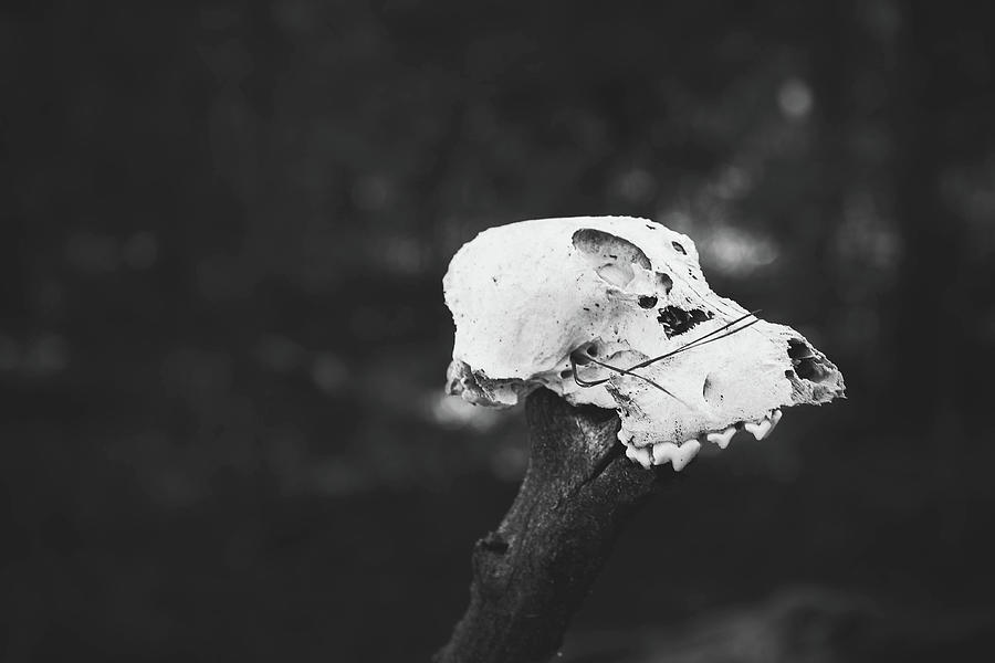 Macabre Photograph - Skull by Kamie Stephen