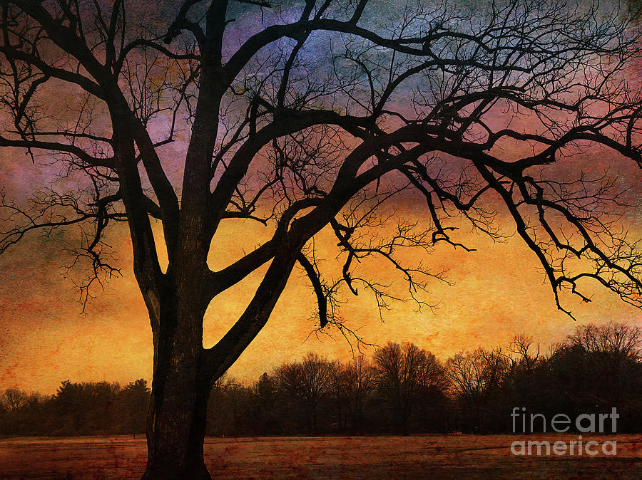 Sky Fire by Terry Rowe