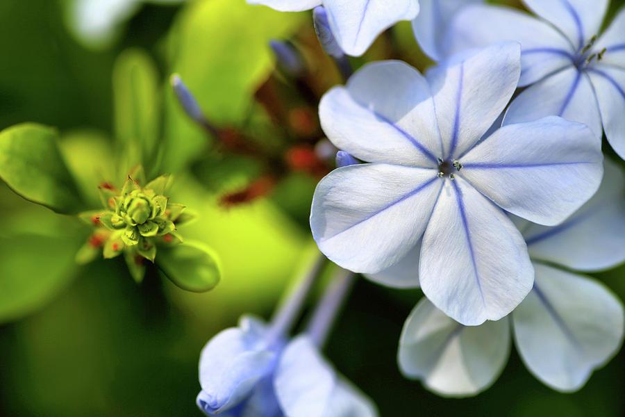 Sky Flower Photograph
