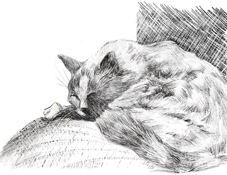Cat Drawing - Sleeping Cat by Janet Felts