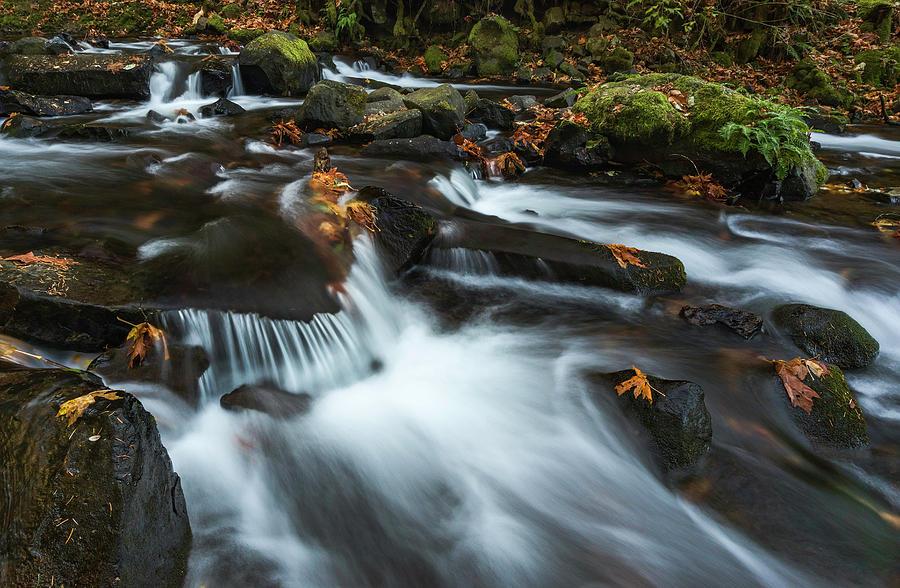 Small Autumn Stream by Harold Carlson