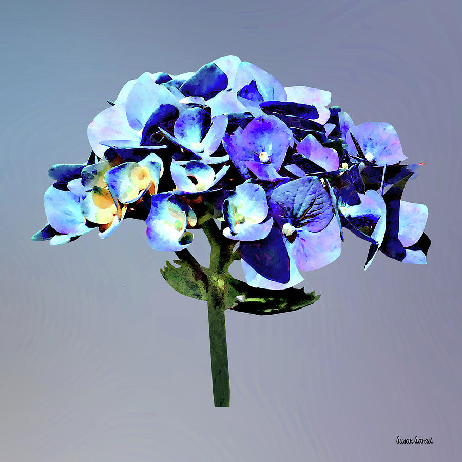 Small Blue Hydrangea by Susan Savad