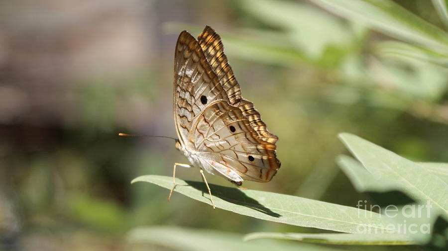Small Butterfly Photograph