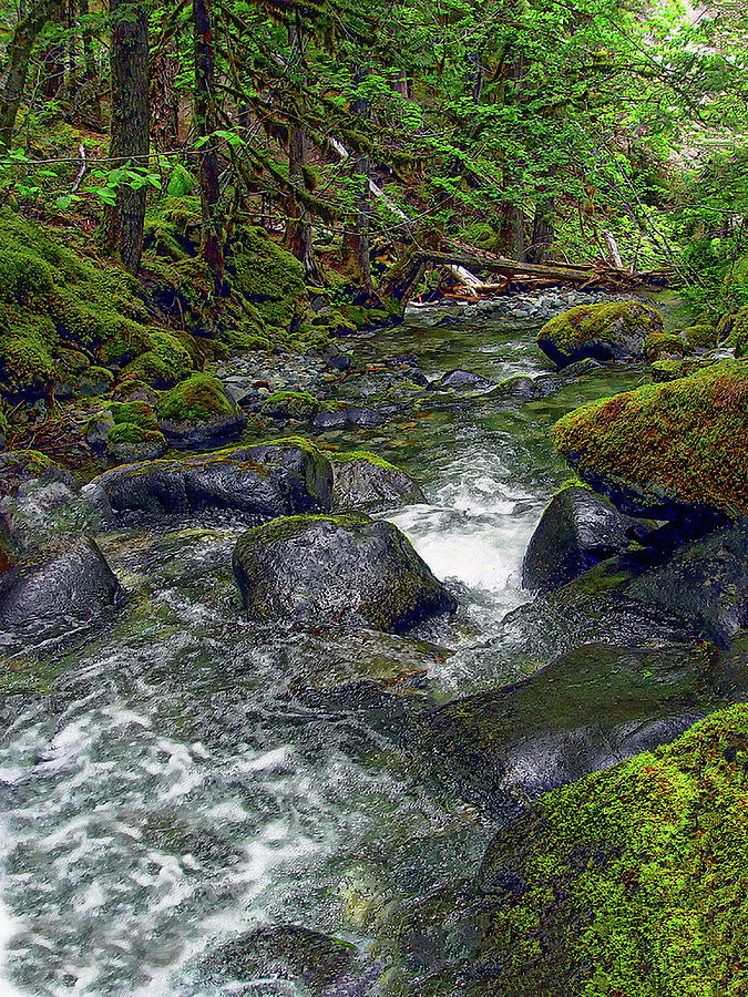 Small Mountain Creek Photograph