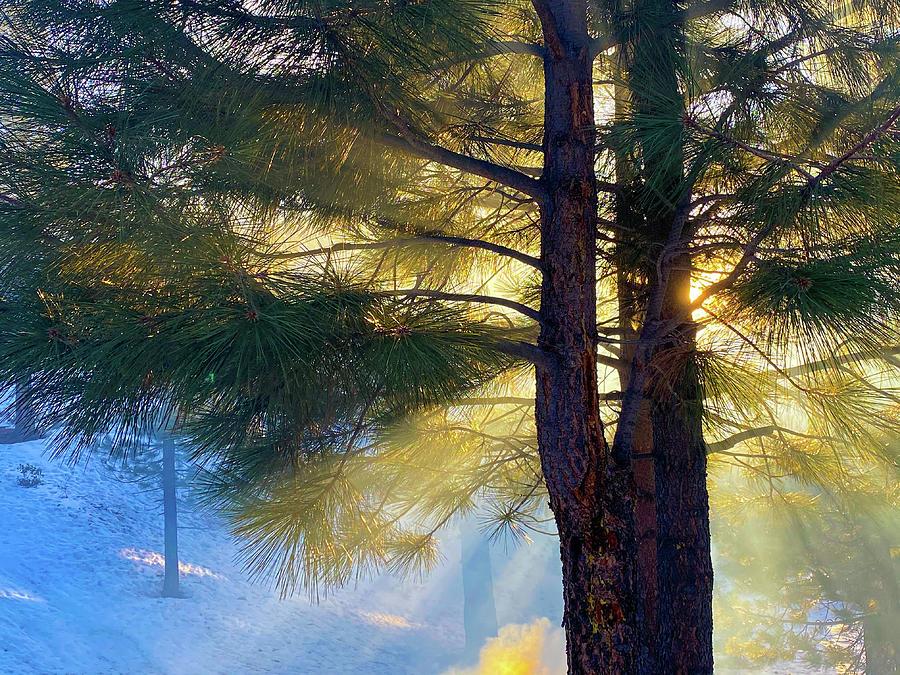 Smoke And Light - Lake Tahoe - Nevada Photograph