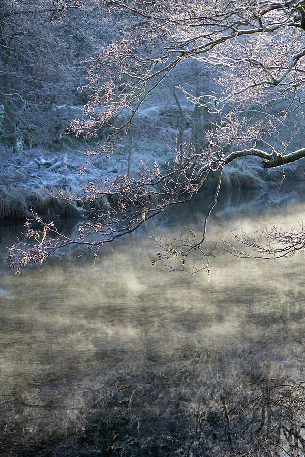 Smoke on the Water - portrait by Anita Nicholson