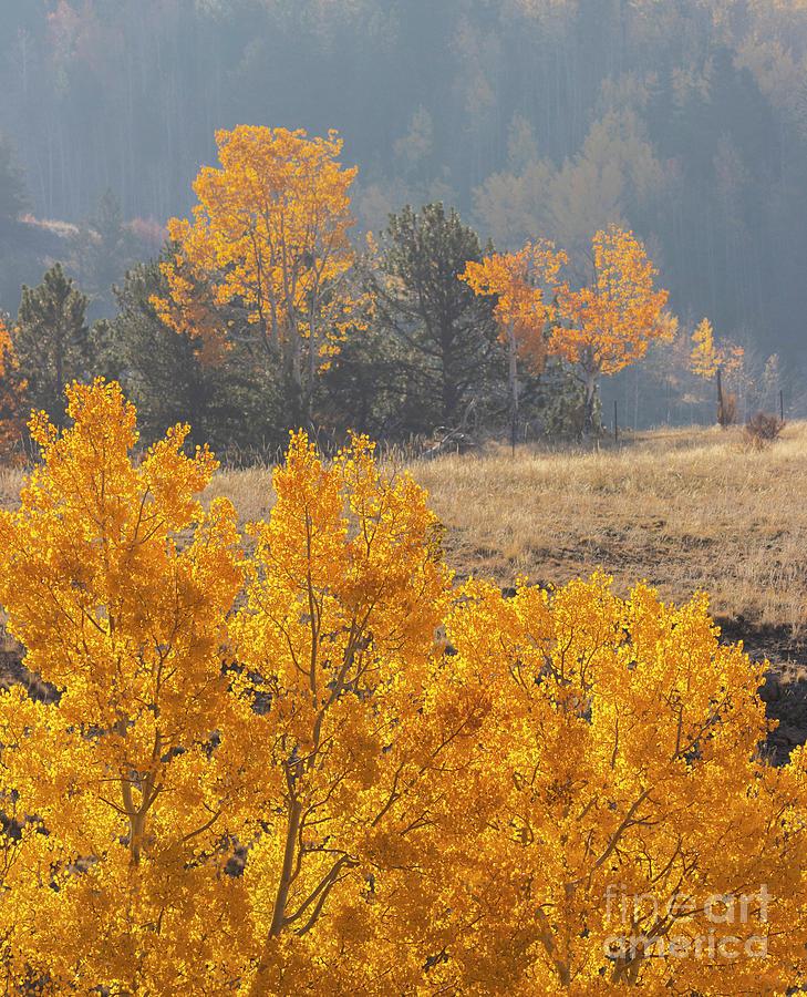 Smokey Autumn Aspen Ridge Photograph
