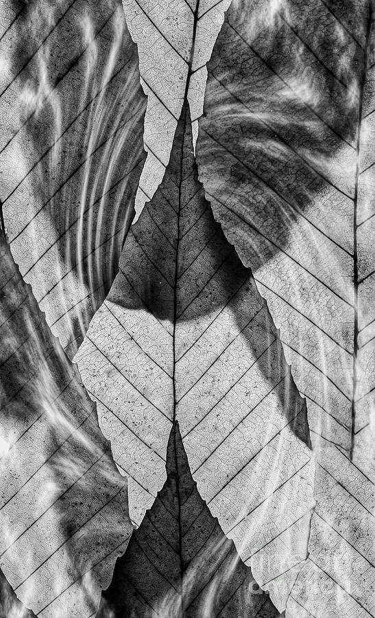 Smoking Leaves BW by Joseph Miko