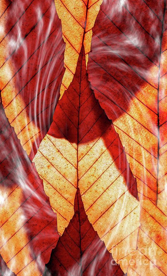 Smoking Leaves by Joseph Miko