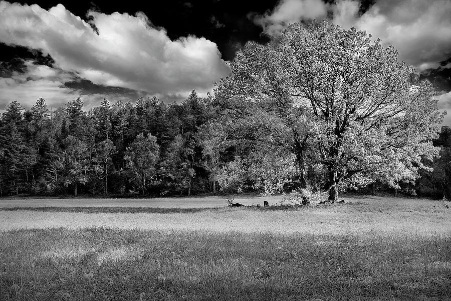 Smoky Mountain Tree II Photograph