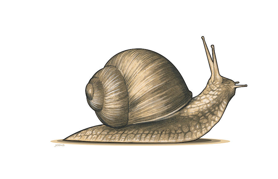 Snail 2 Mixed Media