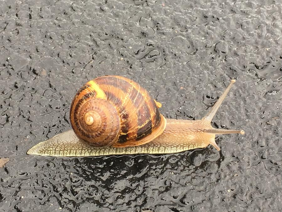 Snail on the Move by Michael Oceanofwisdom Bidwell