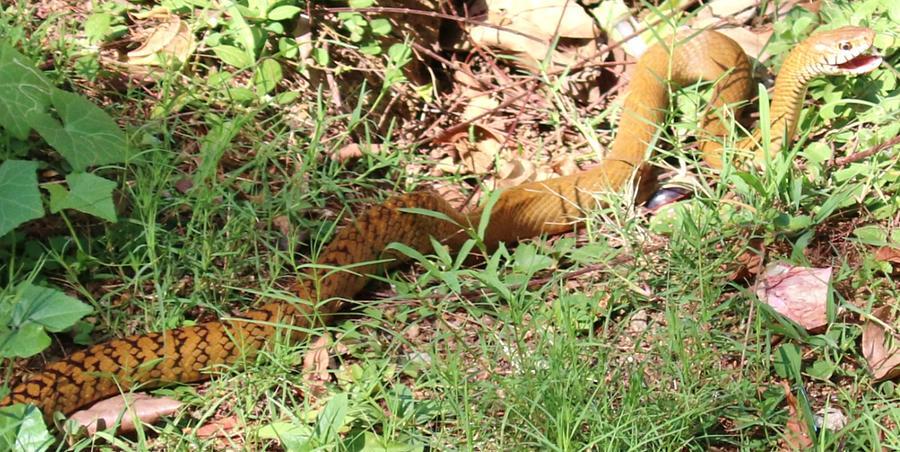 Snake 1 Photograph