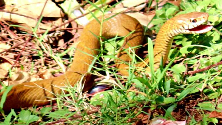 Snake 2 Photograph