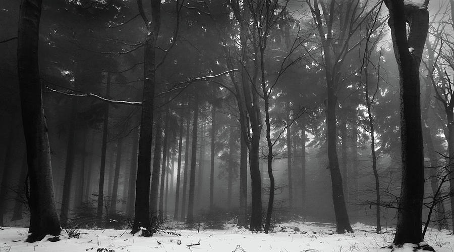 Snow And Mist Covered Woods Photograph