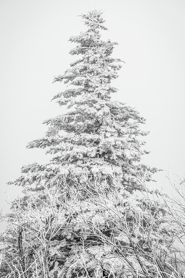 Snow covered by Stacy Abbott