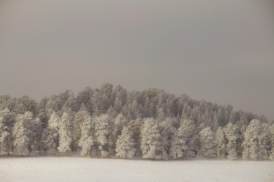 Snow Covered Trees by Kevin Schwalbe