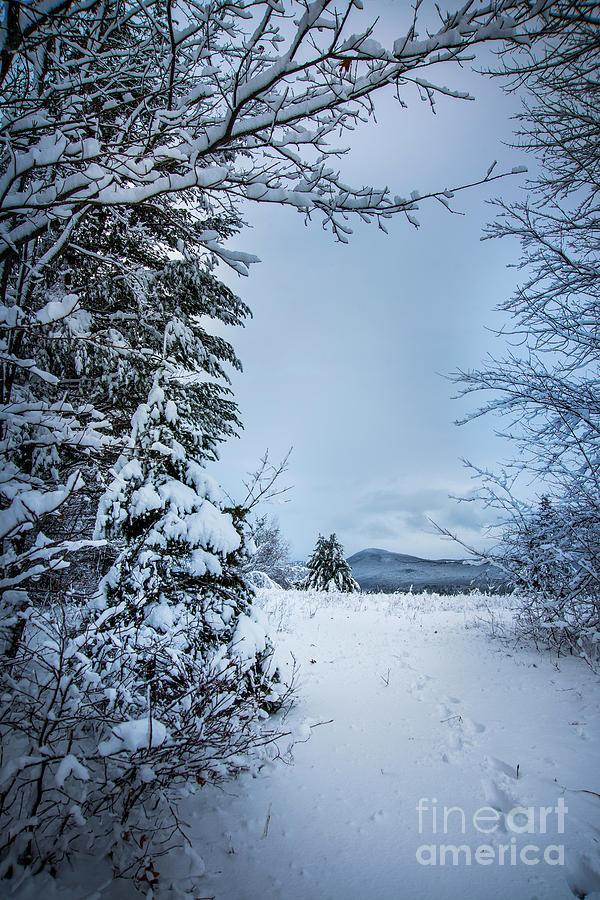 Snow Day Photograph