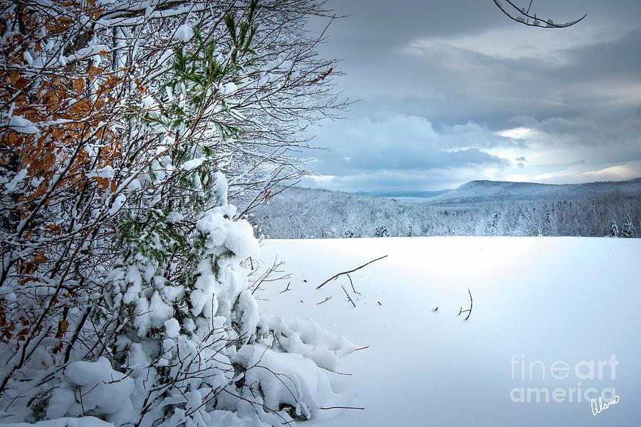 Snow Day Field by Alana Ranney