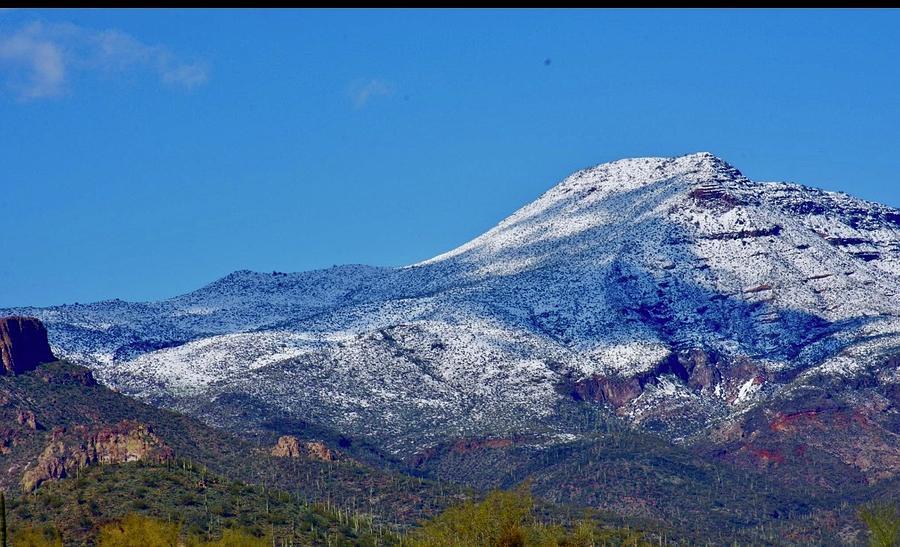 Snow in Scottsdale  by Lisa Pandone