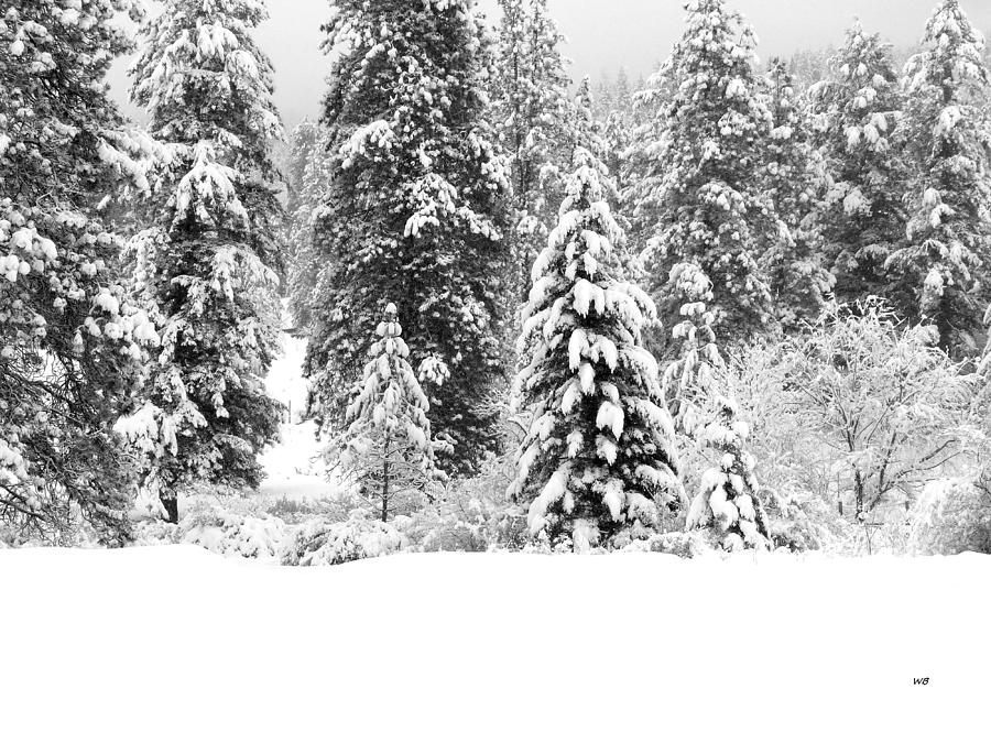 Snow Laden Beauty by Will Borden
