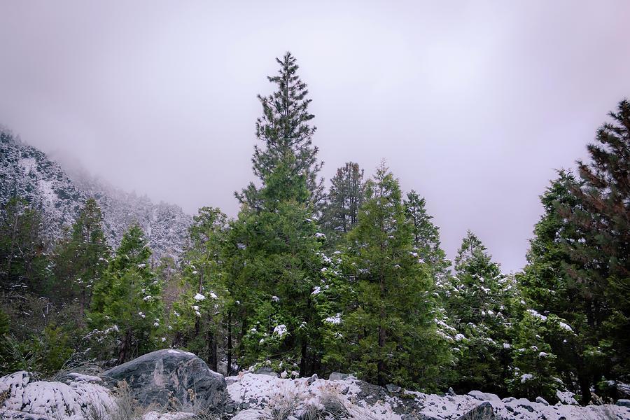 Snowbound by Alison Frank