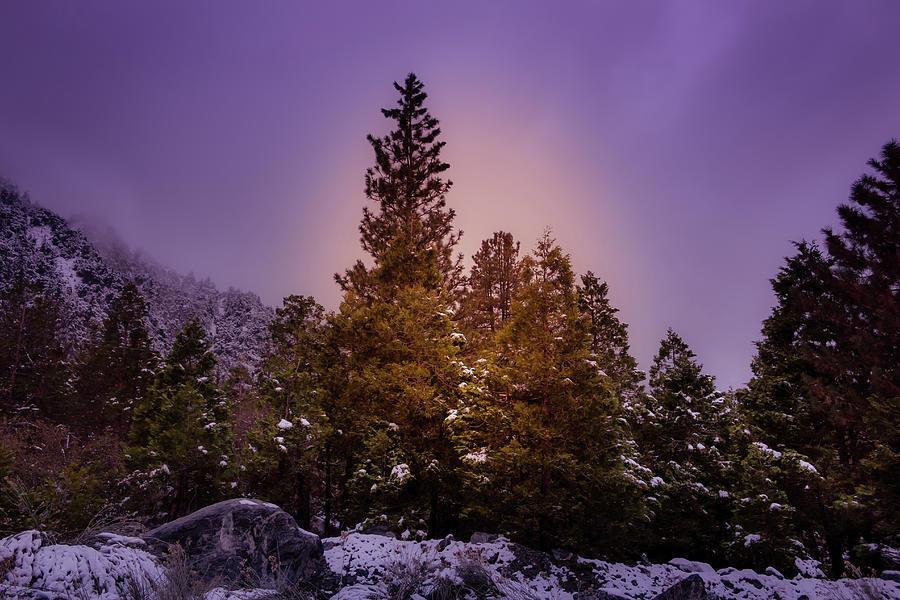 Snowbound II by Alison Frank