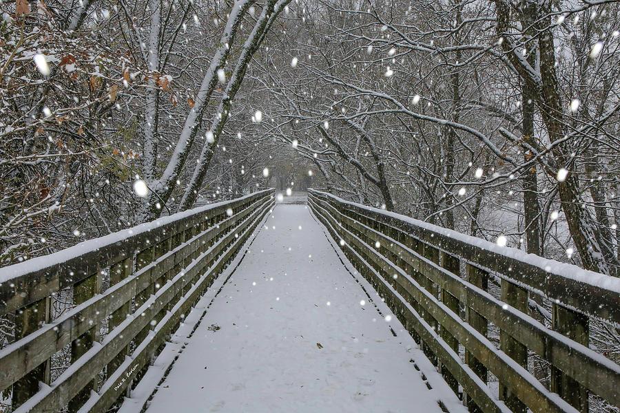 Snowfall on the Creeper Trail by Dale R Carlson