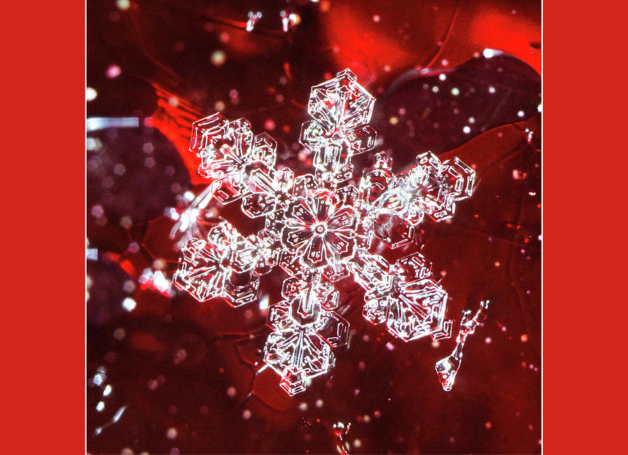 Snowflake on red blank card by Denise Beverly