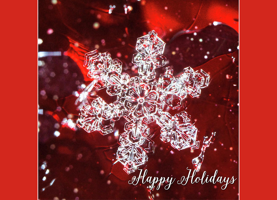 Snowflake on red Happy Holidays by Denise Beverly