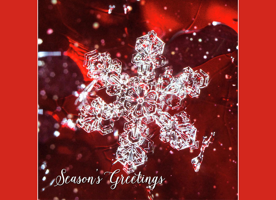 Snowflake on red Seasons Greetings by Denise Beverly