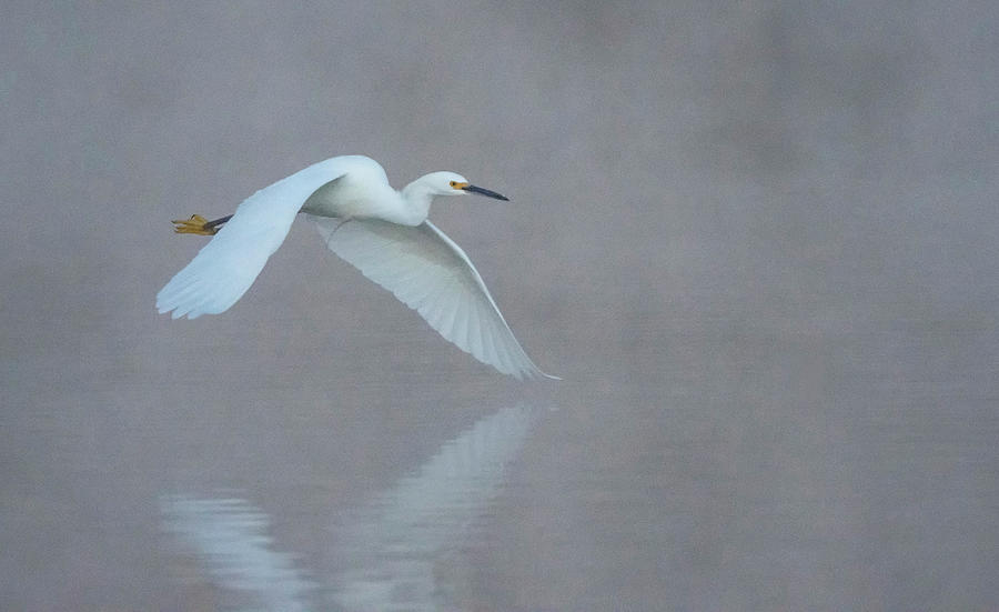 Snowy Egret 4977-011820-2 by Tam Ryan